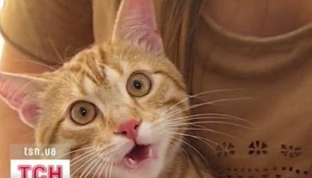 ТСН ищет хозяина для кота Рыжика