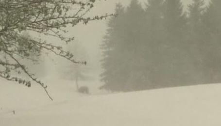 Потужні снігопади накрили Сполучені Штати
