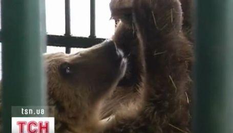 Медведь Потап привыкает к новой обстановке
