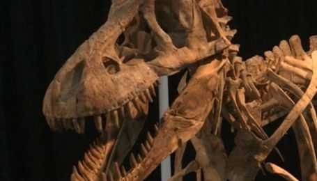 На аукционе в Нью-Йорке выставлен древнейший лот
