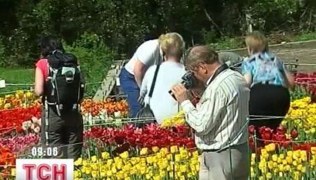 В Никитском ботаническом саду разцвели 28 тысяч тюльпанов