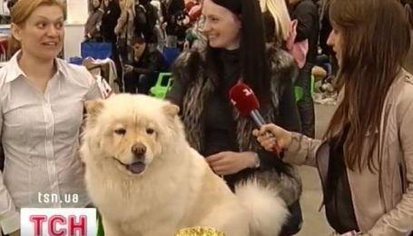 В Киеве в МВЦ прошел первый день выставки собак
