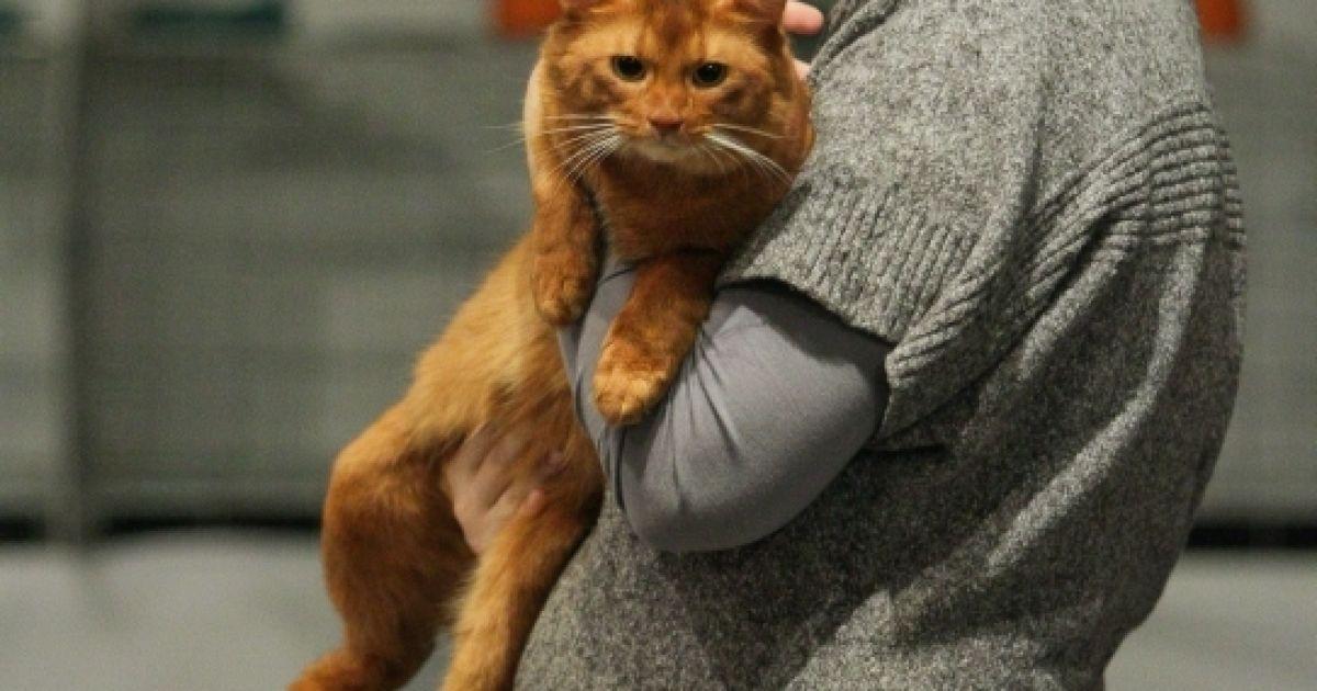 Виставка котів у Києві. @ Вести