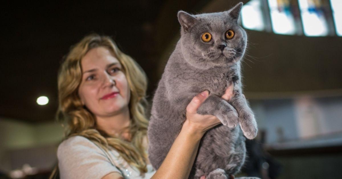 Виставка котів у Києві. @ Украинское фото
