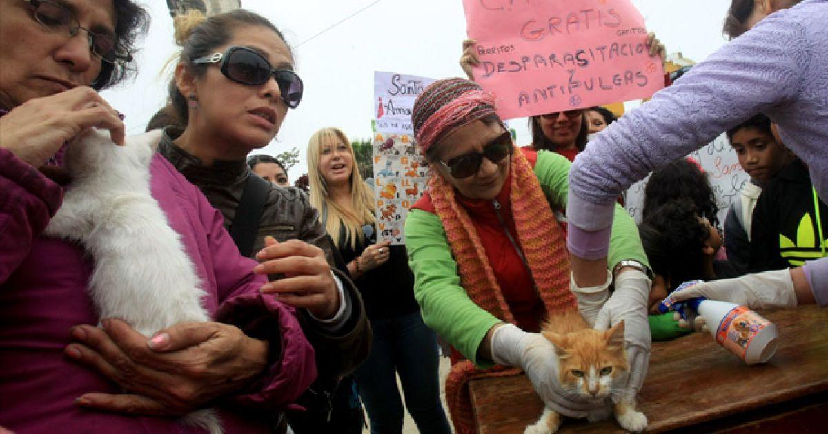 В Перу наелись котов. @ rpp.com.pe