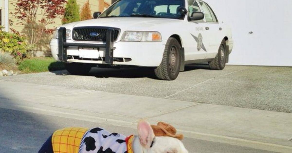 На фото пес пьет виски, прогуливается по городу в костюме ковбоя и ест мороженое в кафе. @ dyvys.info