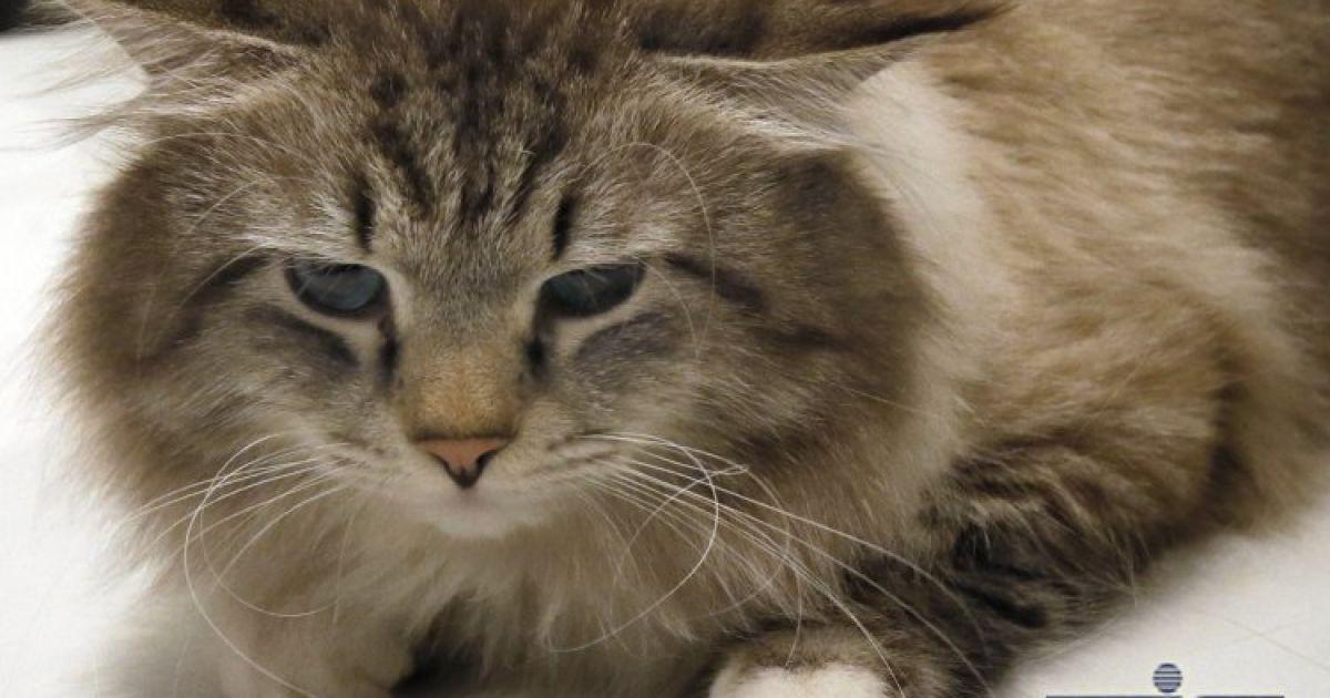 Виставка котів у Києві. @ УНІАН