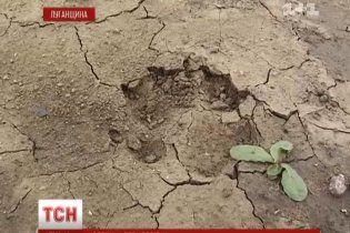 На Луганщині село тероризують вовки