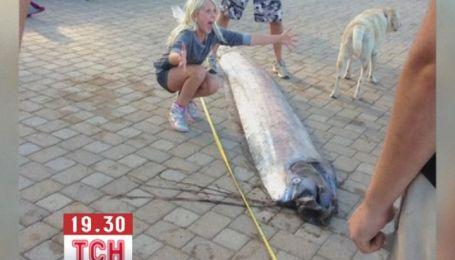 В каліфорнійських водах упіймали 5-метрового оселедцевого короля