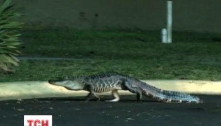 Двухметровый аллигатор пришел в супермаркет в американском штате Флорида