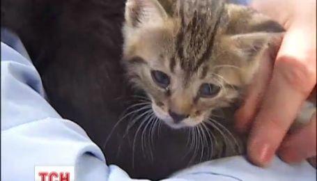 В Киеве на Подоле спасатели достали котят из вентиляционной шахты