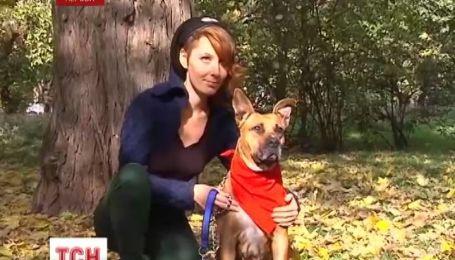 Бездомные псы стали фотомоделями в Херсоне
