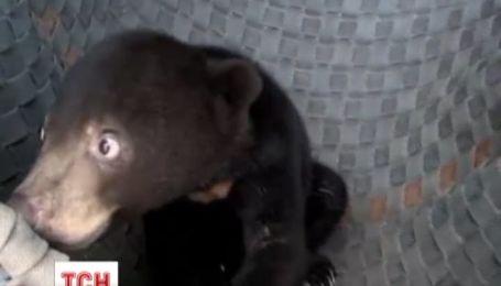 Заповедник для медвежат открыли Камбодже