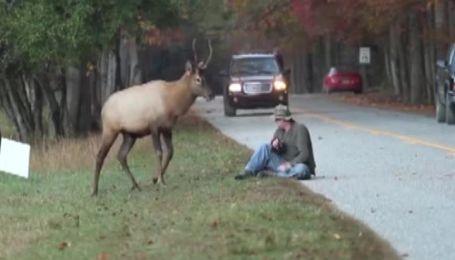 Настойчивый фотограф чуть не поплатился жизнью за фото оленя