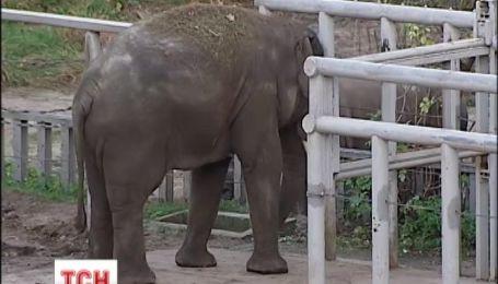 Киевский зоопарк проверяет управление по борьбе с экономическими преступлениями