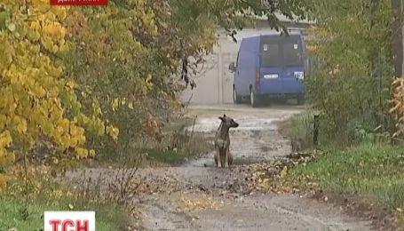 У Краматорську бродячі собаки загризли до смерті 43-річну жінку