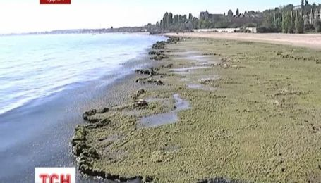 Одесское побережье покрыло тонами зеленых водорослей