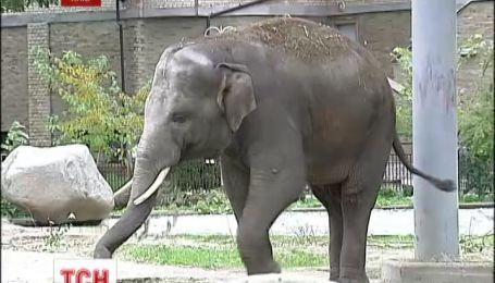 Київський слон став заручником фінансових махінацій колишнього керівництва зоопарку