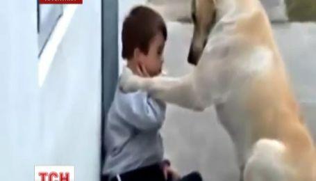 Интернет всколыхнула потрясающая забота лабрадора о больном мальчике