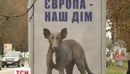 Пес, которого интернет-пользователи обозвали собакой Путина, ушел в рекламный бизнес