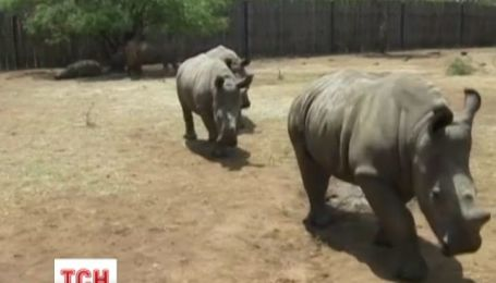 Детский дом для носорогов открыли в Южной Африке