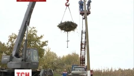 На Днепропетровщине электрики плетут гнезда аистам