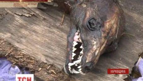 Харківчани запевняють, що знайшли чупакабру