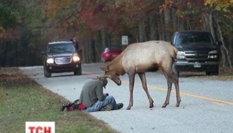 Американского оленя, который стал интернет-сенсацией, усыпили