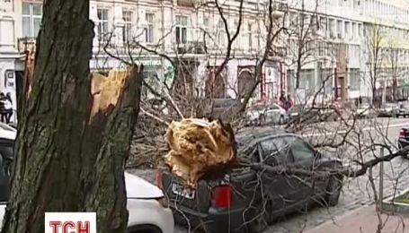 Сильная метель повалила старый каштан на иномарки в центре столицы