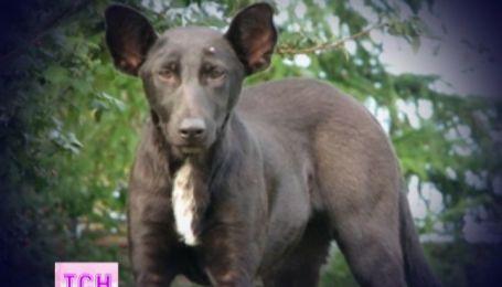 На Крещатике сфотографировали собаку похожую на Путина