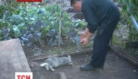 В Бердичеве нашли след чупакабры