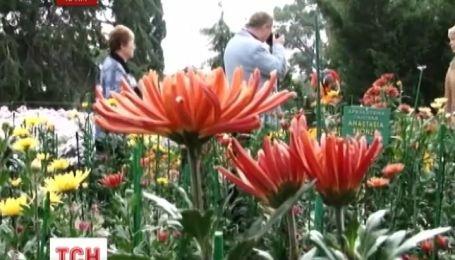 В Нікітському ботанічному саду розпочався бал хризантем