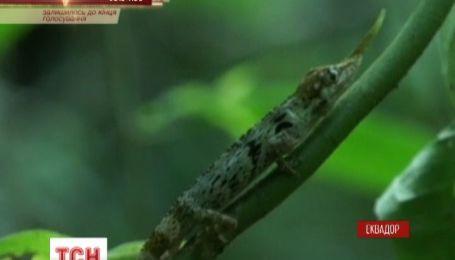 В Еквадорі десятки науковців досліджують ліси у пошуках рідкісної ящірки