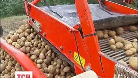 В Аграрном министерстве утверждают, что картофель должен стоить 3,30 гривен