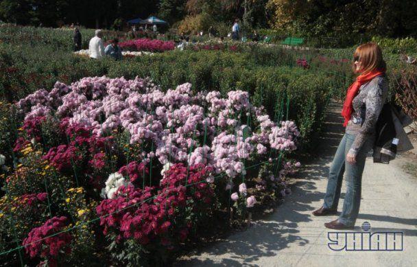 """Ювілейний """"Бал хризантем"""" порадує відвідувачів яскравими барвами"""