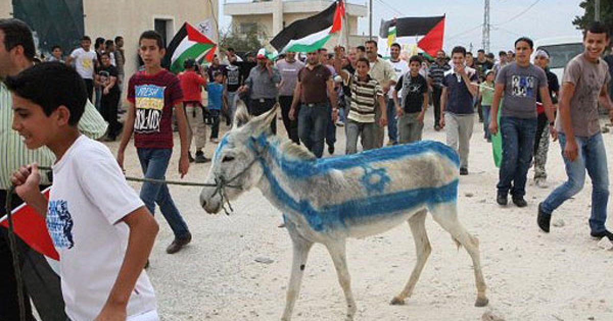 Кфар Кадум. Палестинці пофарбували віслюка у кольори ізраїльського прапора під час демонстрації на підтримку запиту до Організації Об'єднаних Націй щодо визнання державності Палестини. @ AFP