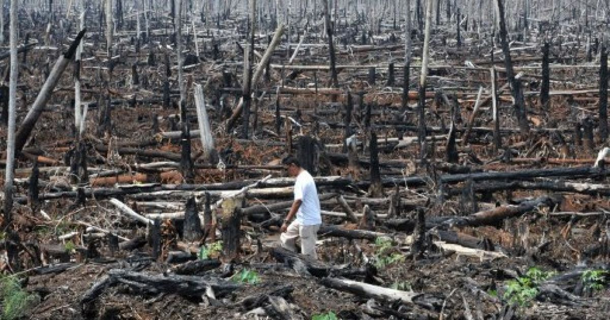 deforestation and pollution essay Deforestation essay deforestation deforest is defined as the cutting down and removal of all or most of the trees in a forested area (dictionarycom) the action of deforestation.