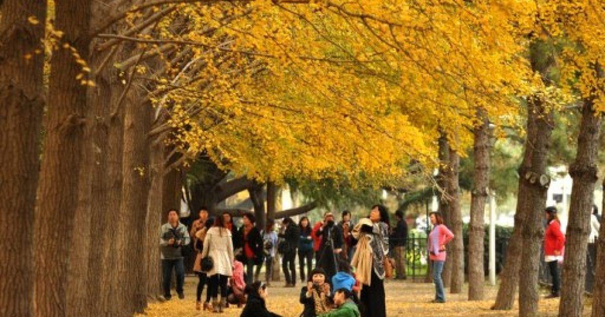 Китай, Пекін. Китайці відпочивають під осінніми деревами на алеї в Пекіні. Через проблему забруднення повітря в місті, жителі все більше побоюються за своє здоров'я. @ AFP