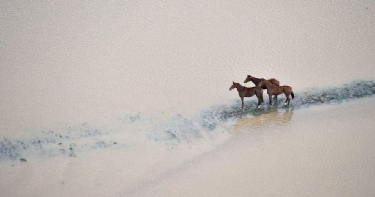 Франція, Рокбрюн-сюр-Аржан. Коні стоять на полі, затопленому під час повені у південно-східному французькому місті. Південь Франції потерпає від сильних дощів, які викликають повені. @ AFP