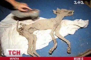 На хуторі під Фастовом знайшли мумію чупакабри