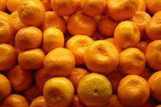 Зміни клімату дозволять вирощувати мандарини в Одесі