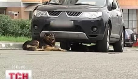 Собаки нападают на автомобили