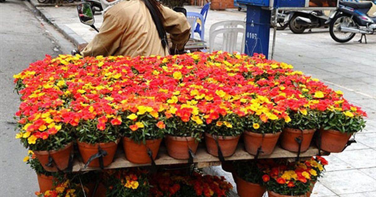 В'єтнам, Ханой. Продавець квітів перевозить на мотоциклі свій товар у невеликих керамічних горщиках вулицею у центрі Ханоя. В'єтнам готується до святкування 1000-річчя своєї столиці. @ AFP