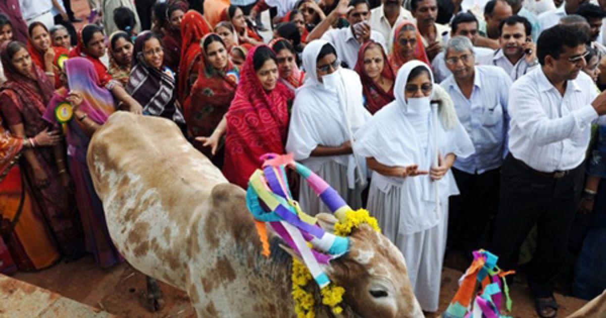 Індуїсти влаштували мітинг з вимогою заборонити вбивство корів у Бангалорі. Раніше вони подали до індійського парламенту законопроект, який забороняє вбивство корів, телят, буйволів та волів, а також зберігання та продаж яловичини. Усіх порушників цього закону вони пропонують позбавляти волі на строк до 7 років. @ AFP