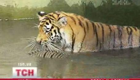 Водні процедури в зоопарку