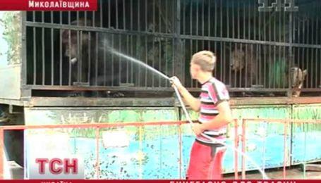 Зоопарк строгого режима на Николаевщине