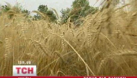 Світовий ринок зерна охопила паніка