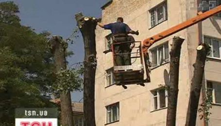 Осторожно, деревья!