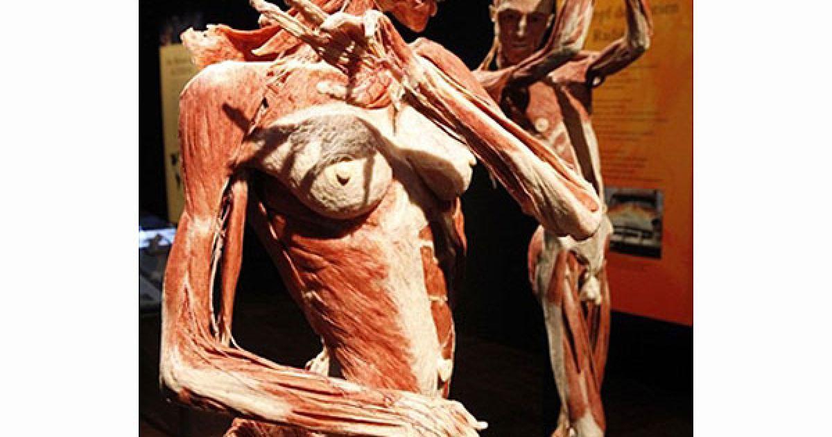 """На виставці """"Світи тіла та цикл життя"""" у німецькому місті Оффенбах-на-Майні представлено більше 200 робіт Гюнтера фон Хагенса. @ AFP"""