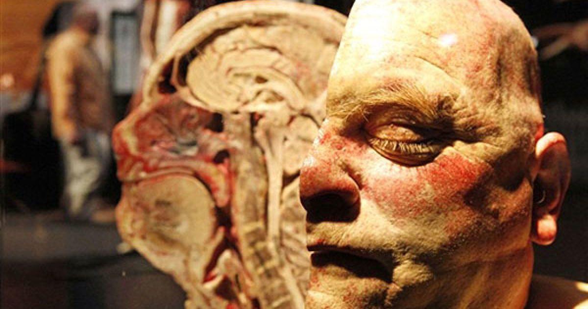 """У німецькому місті Оффенбах-на-Майні відкрилась виставка """"Світи тіла та цикл життя"""" (""""Bodyworlds and the cycle of Life""""). @ AFP"""